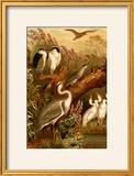 Egrets and Cranes