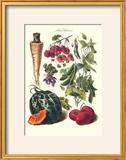 Vegetables; Strawberries  Beans  Tomato  Melon  and Raddish
