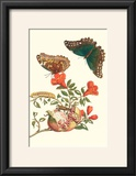 Pomegranate and Butterflies