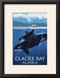 Glacier Bay  Alaska - Orca and Calf