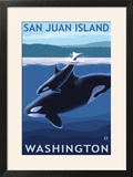 San Juan Island  Washington - Orca and Calf