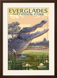 The Everglades National Park  Florida - Alligator Scene