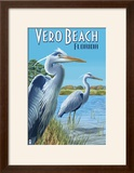 Blue Heron - Vero Beach  Florida