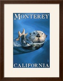 Monterey  California - Sea Otter