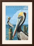Santa Barbara  California - Pelican
