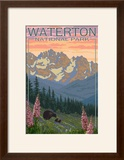 Waterton National Park  Canada - Bears and Spring Flowers