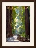 Muir Woods National Monument  California - Pathway