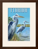 Blue Herons in Grass - Florida