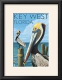 Key West  Florida - Brown Pelican