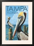 Tampa  Florida - Pelicans