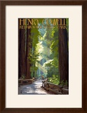 Henry Cowell Redwoods State Park - Pathway in Trees