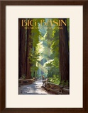 Big Basin Redwoods State Park - Pathway in Trees