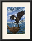 Olympic National Park - Eagle and Chicks