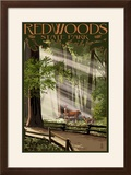 Redwoods State Park - Deer and Fawns