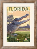 Florida - Alligator Scene