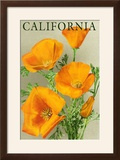 California - Poppies