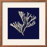 Seaweed on Navy II