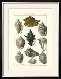 Seaside Treasures II