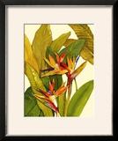Tropical Bird of Paradise