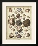 Turban Shells