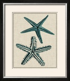 Coastal Starfish I