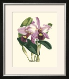 Magnificent Orchid III