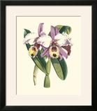 Magnificent Orchid I