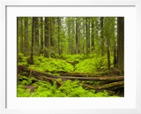 Forest Floor  Humboldt Redwood National Park  California  USA
