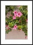 Hibiscus Flower  Cozumel  Mexico