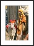 Sadhu  Holy Man  with Cow During Pushkar Camel Festival  Rajasthan  Pushkar  India
