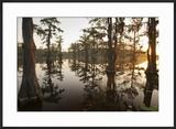 Caddo Lake  Texas  USA