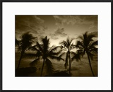 View Palm Trees on Beach  Big Islands  Kona  Hawaii  USA