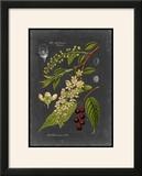 Midnight Botanical II
