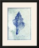 Conch Shell B