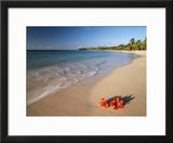 Tropical Paradise  Tabyana Beach  Roatan  Honduras