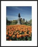 Tulip Patch with Statue of Washington  Boston  Massachusetts  USA