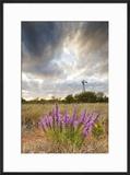 Dense Blazing Star (Liatris) and Windmill on Texas Prairie  Texas  USA