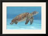 Ocean Sea Turtle I