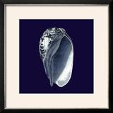 Indigo Shells V