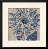 Indigo Sunflower