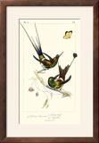 Lemaire Hummingbirds IV