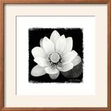 Lotus Flower II