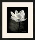 Lotus Flower X