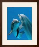 Bottlenose Dolphins  Pair Dancing Underwater