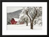 Fresh Snow on Red Barn Near Salmo  British Columbia  Canada