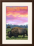 Yellowstone National Park - Bison and Sunset