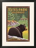 Estes Park  Colorado - Black Bear in Forest