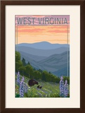 West Virginia - Bear and Spring Flowers