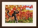 Vineyard Fall Colors