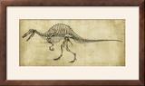 Spinosaurus Study